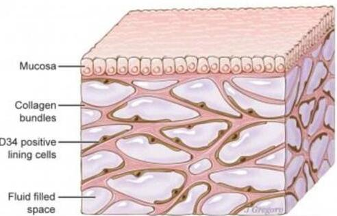 """科学家发现人体新器官:遍布全身,充当内置""""减震器"""""""
